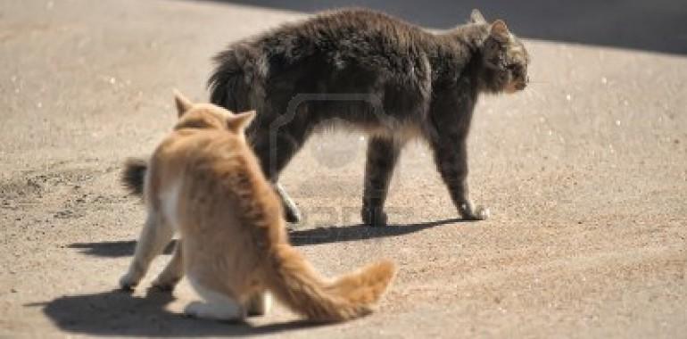 Actie Castratie en Sterilisatie katten
