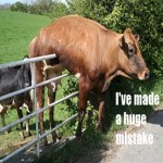 cow fence2
