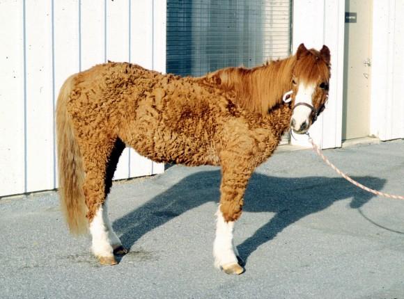"""Paardenavond  """"Uw paard gezond houden"""""""