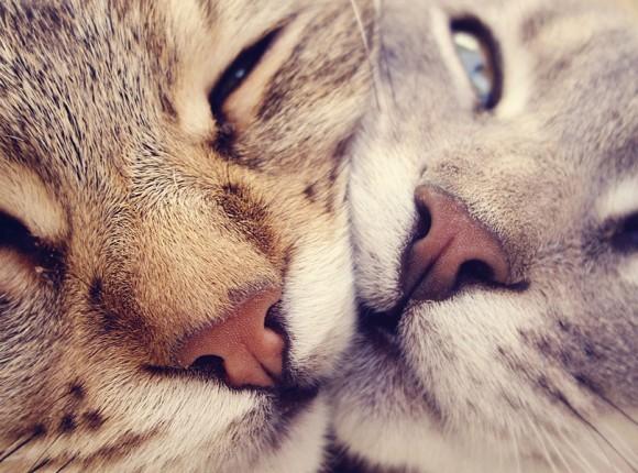 Sterilisatie & Castratie Actie voor Katten