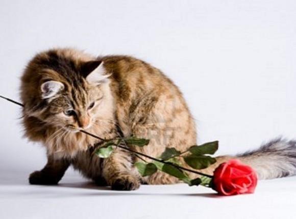 Valentijnsactie Castratie en Sterilisatie katten