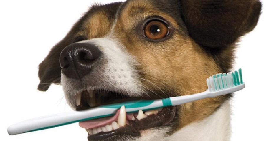 hond gebit tandenborstel