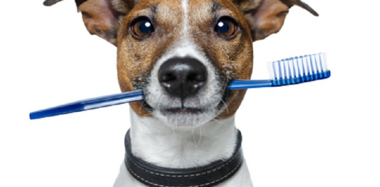 Februari, maand van de gebitscontrole voor hond, kat en konijn
