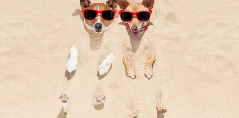 Op vakantie met uw huisdier