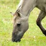 paard hoofd gras