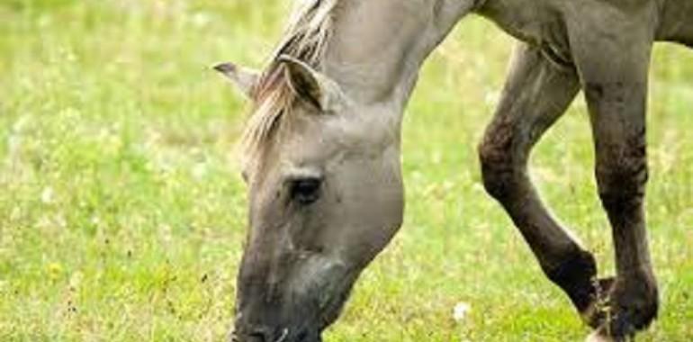 Zandkoliek bij paarden