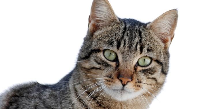 Verhoogde bloeddruk bij oudere katten