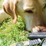 Hond met gsm