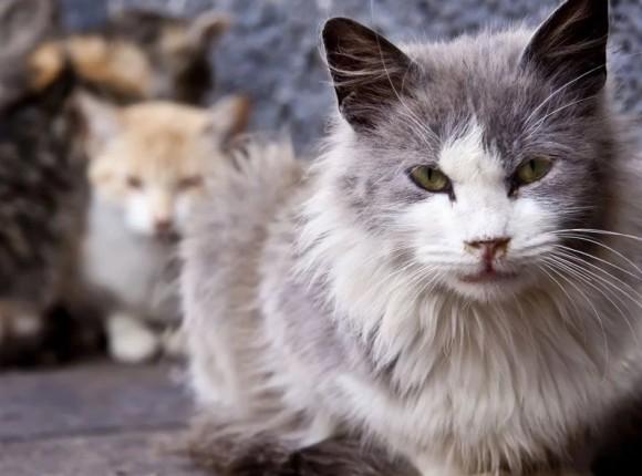 Oktober is de maand van de oudere kat!