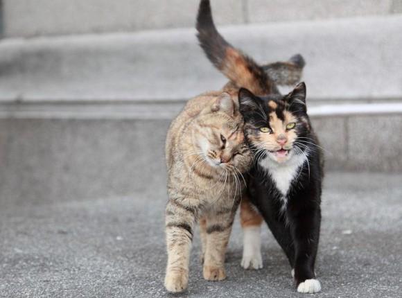 Sterilisatie- en Castratie actie voor katten