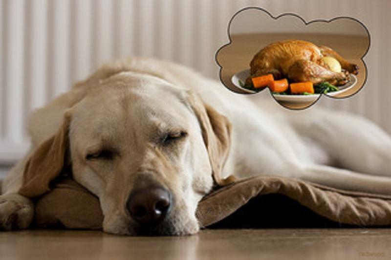 dog-diet-turkey