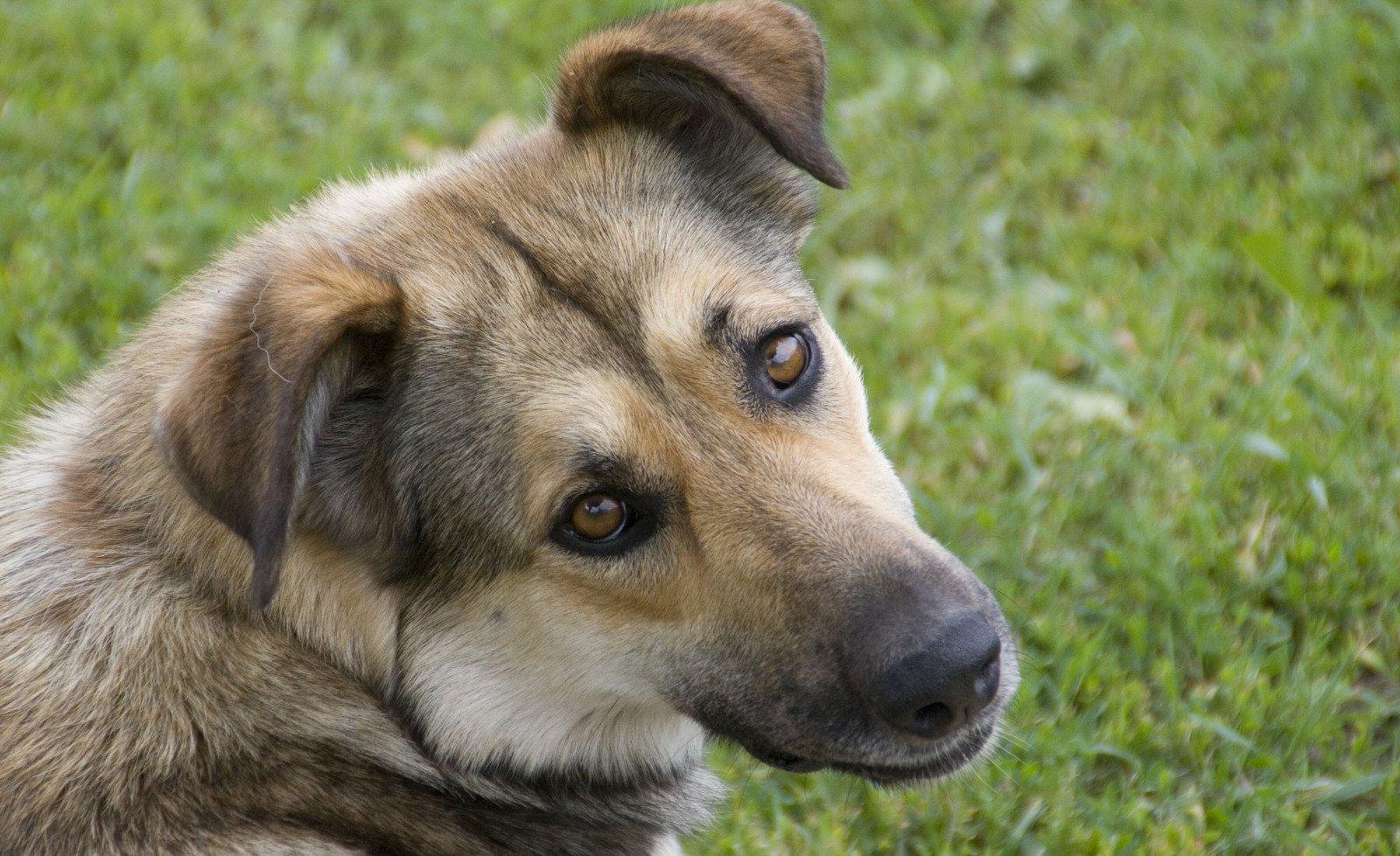 dog-1369362